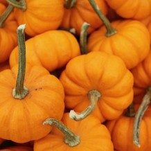 pumpkins containing pumpkin seeds