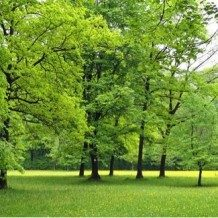 trees in a park
