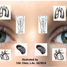 face with drawings of organs placed over it Chinese Ocular Medicine