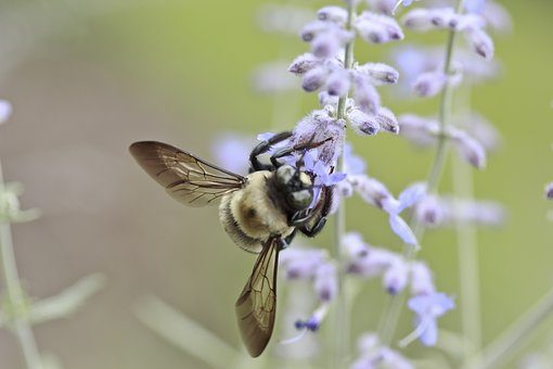 Enjoy Spring to the Fullest with Holistic Remedies for Allergy Relief -  Holistic Healing News
