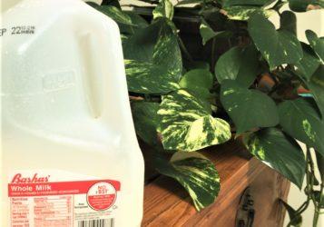 Milk-2-357x250.jpg